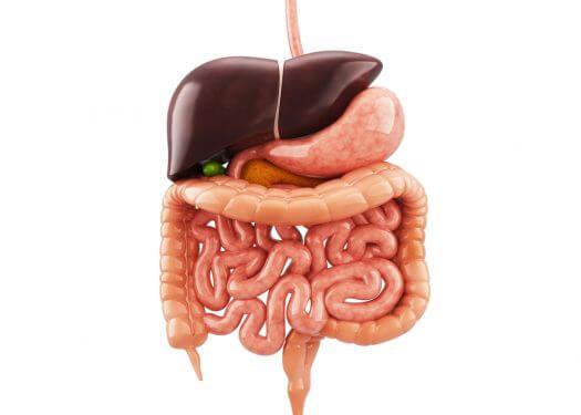 """Gut Health - """"Probiotic and Prebiotic"""""""